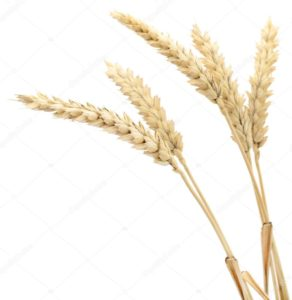 depositphotos_107691884-stock-photo-ears-of-wheat
